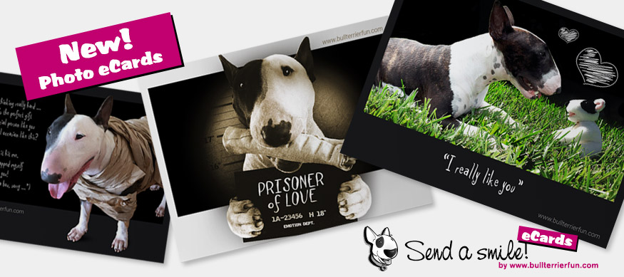NEW! FREE Photo Fun eCards of Bull Terrier Mila