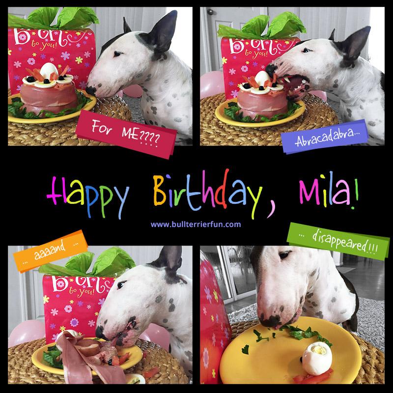 Bull Terrier Geburtstag