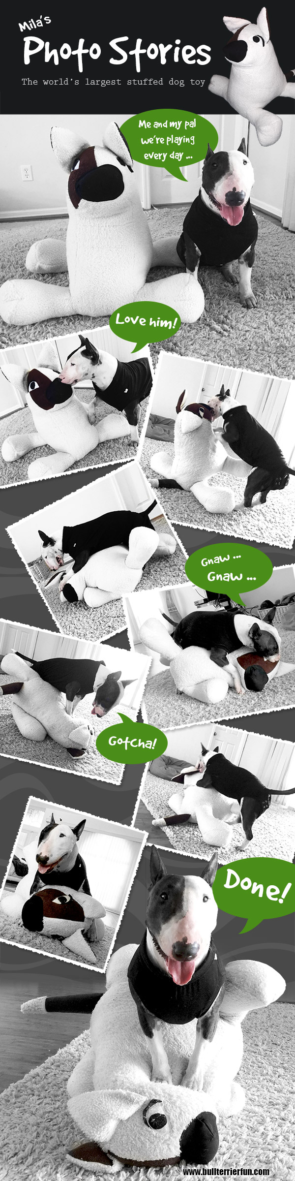 Bull Terrier Mila with her humongous stuffed toy