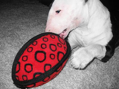 My dog destroys all her toys
