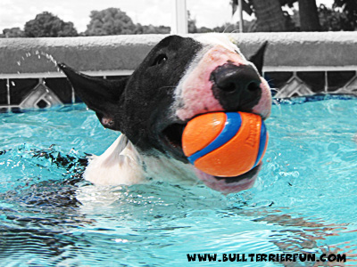 mila_ball_water