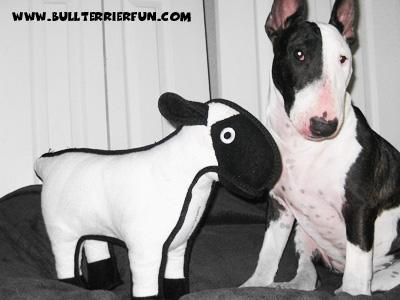 "Tuffy toys - Soft dog toys that last - Mila and her Tuffy dog toy ""Sherman"" the sheep"