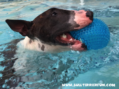 Spiky ball for dogs