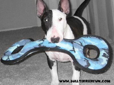 Tuffy toys - Soft dog toys that last - Mila with her Tuffy Tug-O-war dog toy