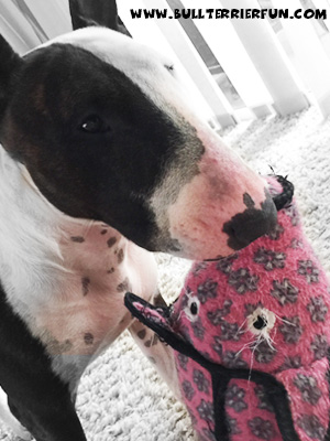 "Tuffy toys - Soft dog toys that last - Mila with her Tuffy dog toy ""Polly"" the Pig"