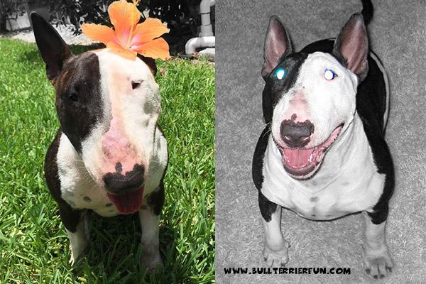 """""""Dangerous dog breeds"""" - myth or prejudice?"""