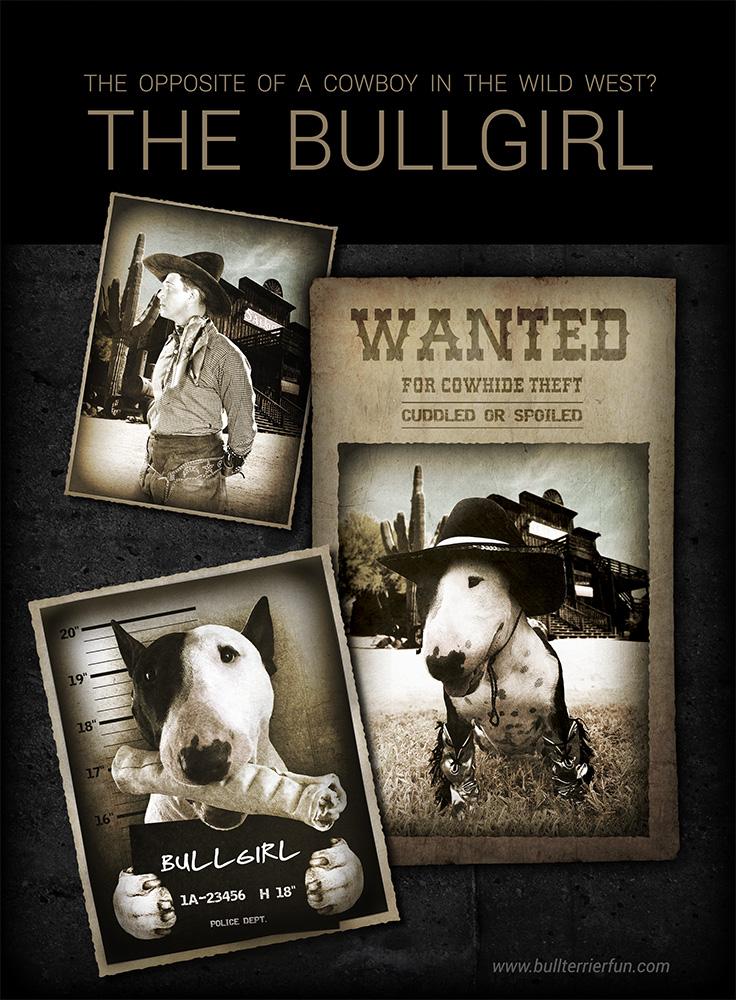 bullterrierfun-bullgirl