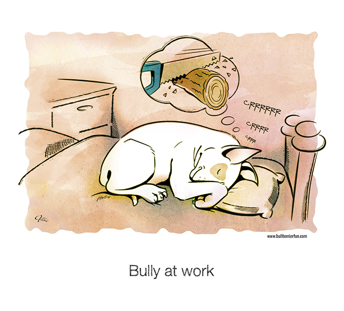 Bull Terriers don't snore, they work